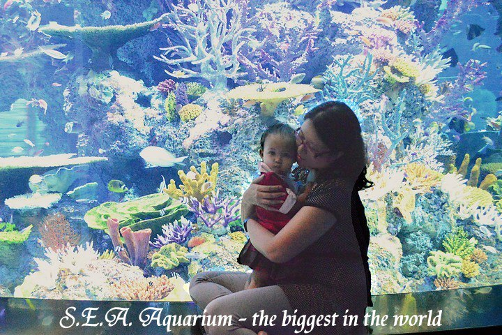SG_SEA Aquarium