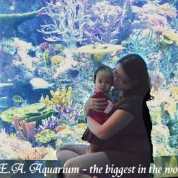 SG_SEA Aquarium